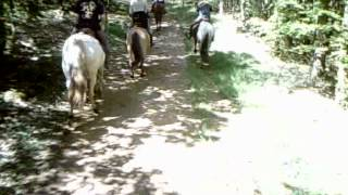 Balade aux bois du Gard 6 cavalières le 130512