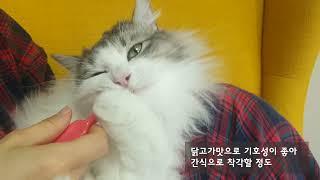 고양이 양치 테페 어금니 칫솔
