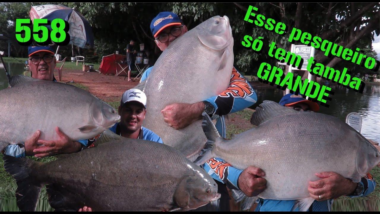 Ilha do Pescador - Esse pesqueiro só tem tambas grandes - Fishingtur na TV 558
