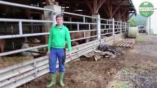 agriKULTUR: Mathias - Ein frisches Bett für die Bullen