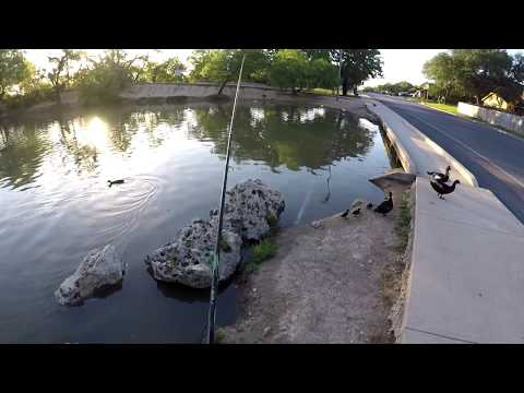 BIG BASS And CATFISH Live In This Dirty Urban Pond!