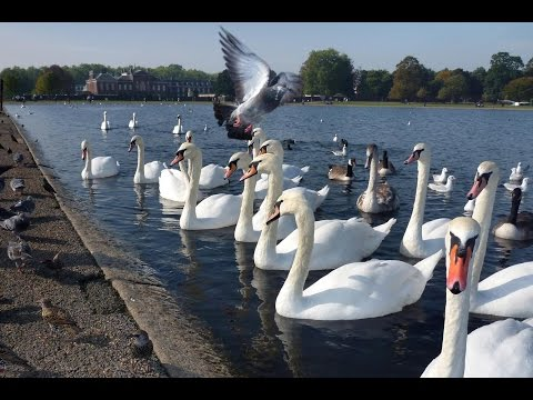 Kensington Gardens London, Facts and Figures