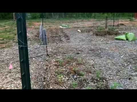 How Do I Keep Deer Out Of My Garden?   YouTube