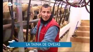 Ancha es Castilla-La Mancha. Tébar. 11.04.2013