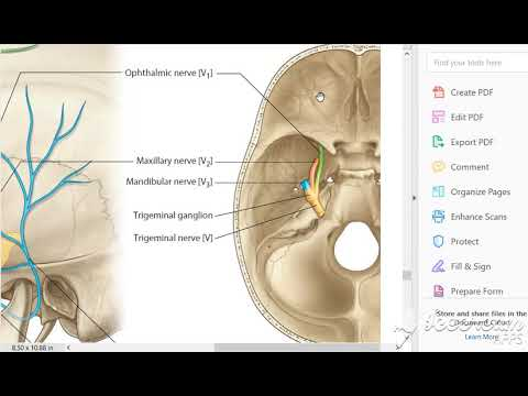 5th cranial nerve - Trigeminal nerve | Nucleus| Functional components| Trigeminal ganglion |Branches.
