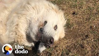 Dog Refuses To Get Inside  | The Dodo