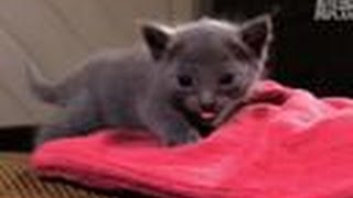 Kitten Afraid to Climb | Too Cute!