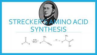 Amino Acids Names II: Cystine, Cysteine and more