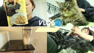 4월:VLOG | 개와고양이가 같이 있으면? | 혼자치…