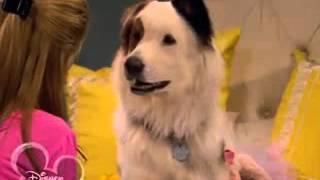 Собака точка ком   1 сезон, 15 серия