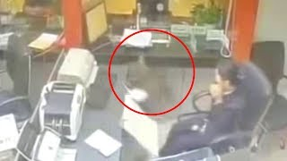 Bank staff terrified by cat randomly falling from the ceiling