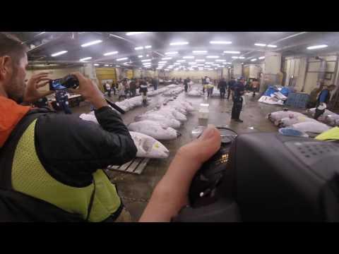 Tsukiji Fish Market Auction