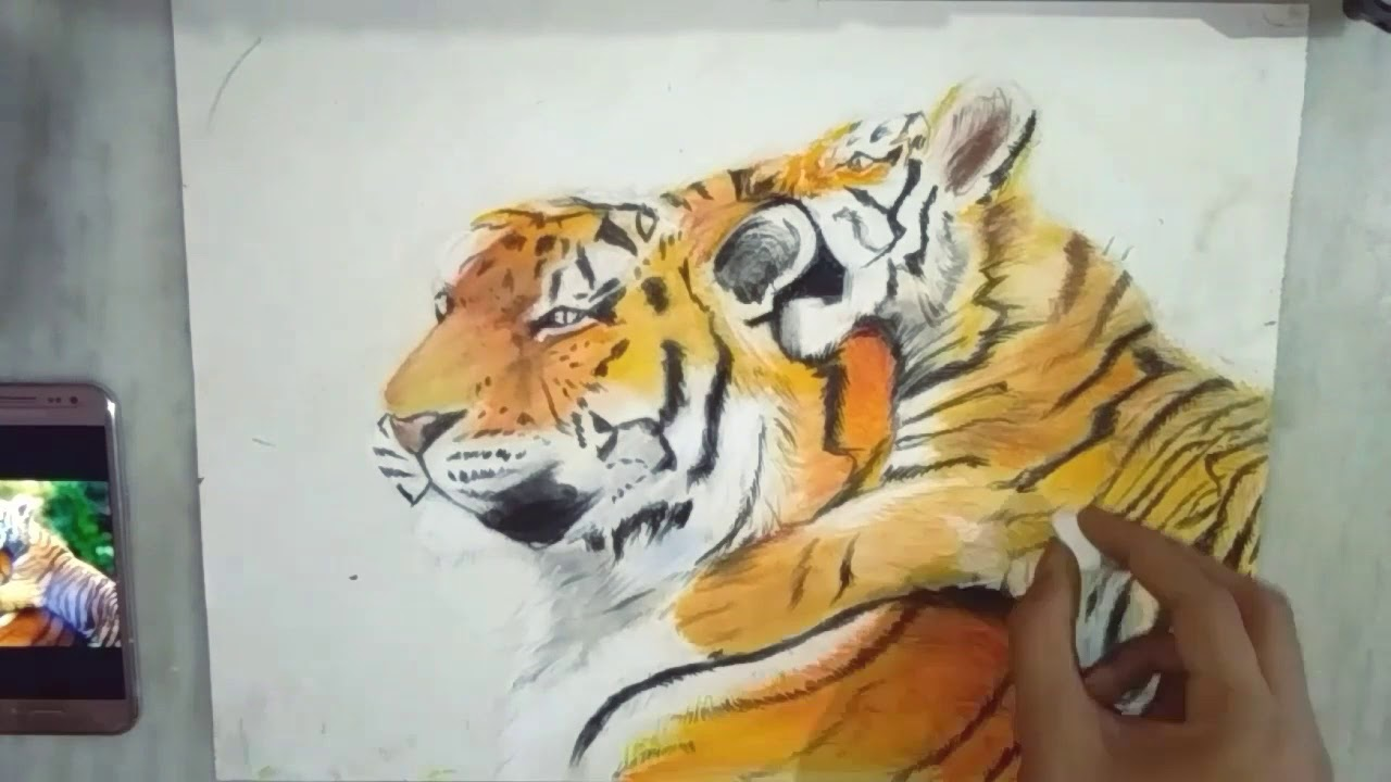 Save Tiger Poster Drawing With Slogans Tiger Drawing Poster On Save Tigers Youtube