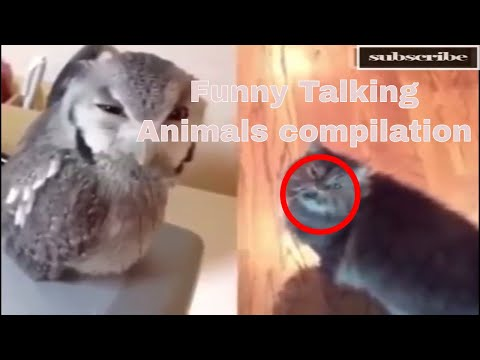 Funny Talking Animals compilation
