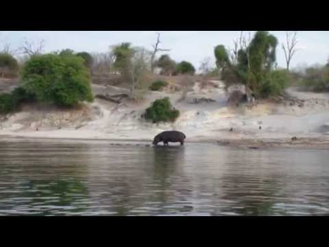 Gondwana Tours & Safaris - Ichingo Lodge (Caprivi Strip,Chobe River) Botswana