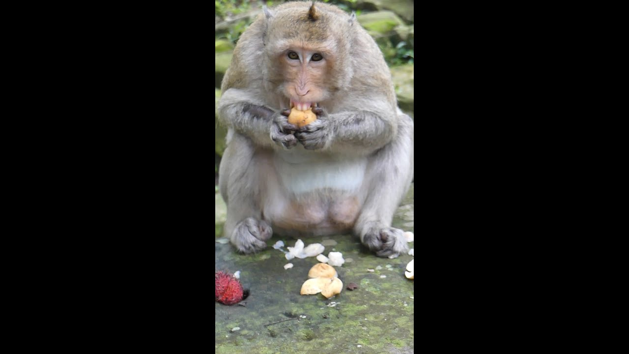 Yummy Monkey Eating Fruit, It's Lucky Day of her