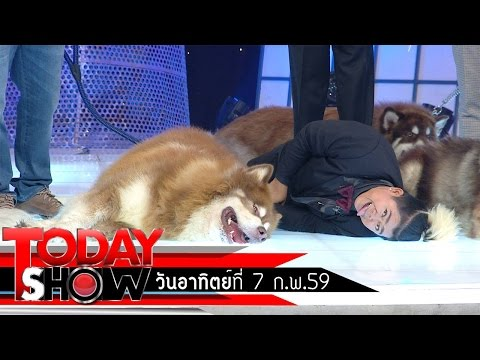 TODAY SHOW  7 ก.พ. 59 (2/3) แปลก เฮ ซ่าส์  สุนัขพันธุ์ไจแอนท์อลาสกัน มาลามิวท์