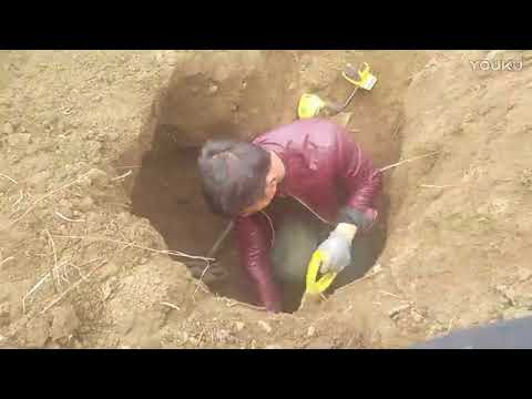 Find treasure underground collect gold coin, gold ring, old coin, old ring