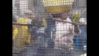 KOLKATA, GALIFF STREET BIRD MARKET