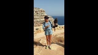 Мальтийский сокол в руках Оксаны Марченко