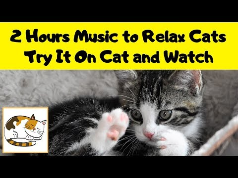 2 HOURS MUSIC TO RELAX CATS! TRY IT ON YOUR CAT AND WATCH LoveCatZone