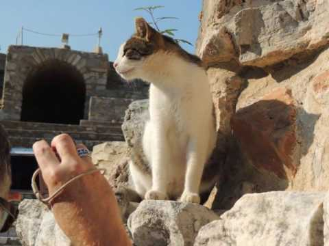 The Cats of Turkey: November 2015