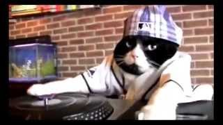 Cat Scratch Fever / DJ KITTY / DJ CAT