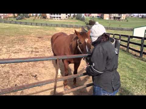 Adam's Turf: Tinners Way at Old Friends Farm Kentucky