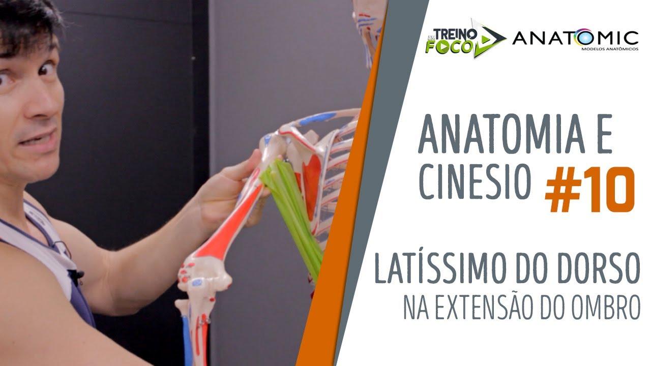 Não faça REMADAS sem antes ver este vídeo - Latíssimo do Dorso - Anatomia e Cinesiologia #10