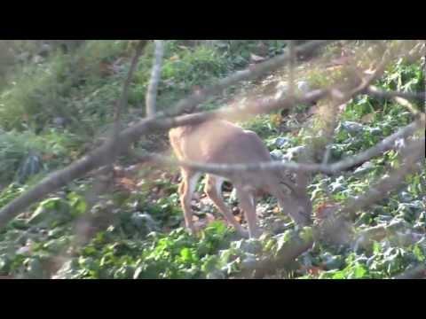 Early Season Bow Hunt In Ohio