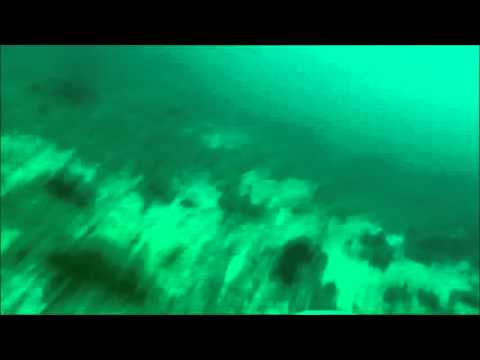 Online Resource 6: Swimming Rock Kelp seabed, Handley & Pistorius 2015