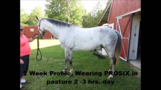 ProSix - TWH Post EPM Treatment - 1 Year Later