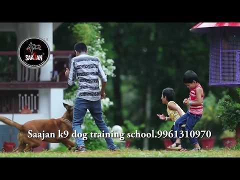 എന്റെമ്മേടെ ജിമിക്കിക്കമ്മല്(entammede jimikkikammal).saajan k9 dog training school.9961310970