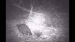Bushnell Trail Cam Animals at Night