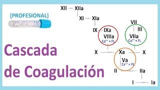 De coagulacion deficit por k trastornos de la vitamina