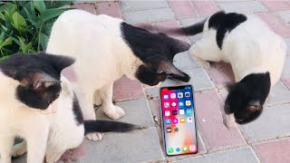 CAT REACT TO MEOW MOBILE SOUND