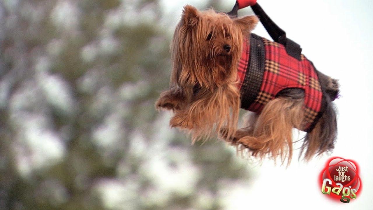 Chien Volant gag - chien volant** - youtube