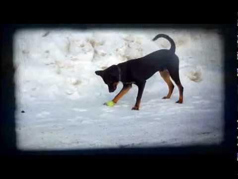 dog gone gone dog gone  video
