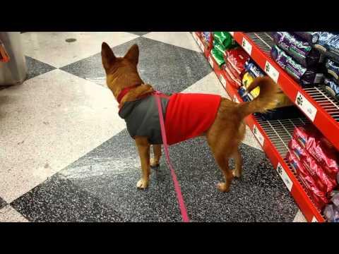 Mabel Goes to Pet Food Express