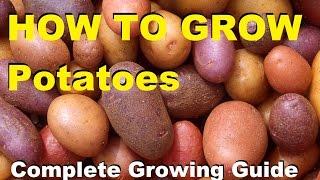 How to Grow Potatoes - Complete Growing Guide