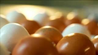 Тайны еды  Яйца