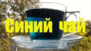 Синий чай из Тайланда. Butterfly Pea Tea