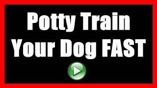 How To Potty Train A Dog To NOT Poop Indoors | House Train A Dog To Go Outside