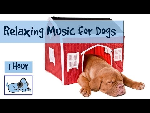 1-hour-dog-music-special!-relaxing-music-for-puppies-and-dogs!-help-your-dog-to-calm-down-🐶-rmd07