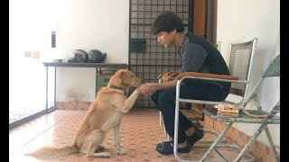 LIFE WITH A DOG | DOG SHORT FILM WITH A MESSAGE  || MOHAK MEET