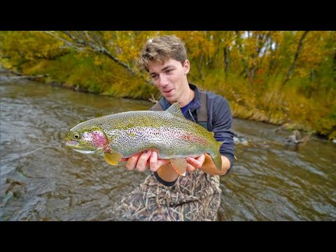 Creek Fishing The Arctic Tundra For Rainbow Fish