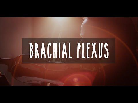 Virtuosity, How Our Fingers Can Make Music: BRACHIAL PLEXUS - UBC Neuroanatomy - Season 2 - Ep 2