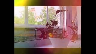 """""""Доброе утро"""" Комнатный цветок который реально живой и двигается."""