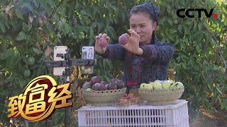 《致富经》 20200401 网红夫妻创富记| CCTV农业