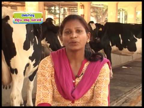 New ways of cow farming | Improved Livestock Farming